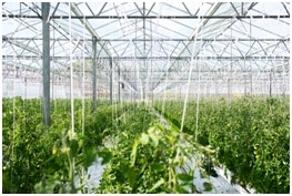 Agri-food and agricultural industry. Greenhouse.