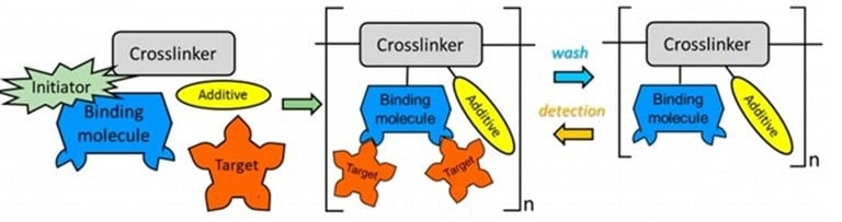 Brief synthesis and reaction processes for a Molecularly Imprinted Polymer (MIP). Micro and nanostructures.